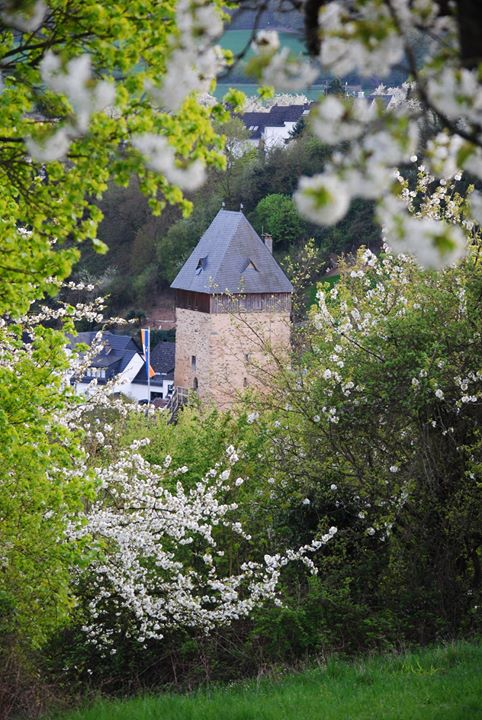 Sommer, Sonne, Kirschblüten – die Burg erwacht …